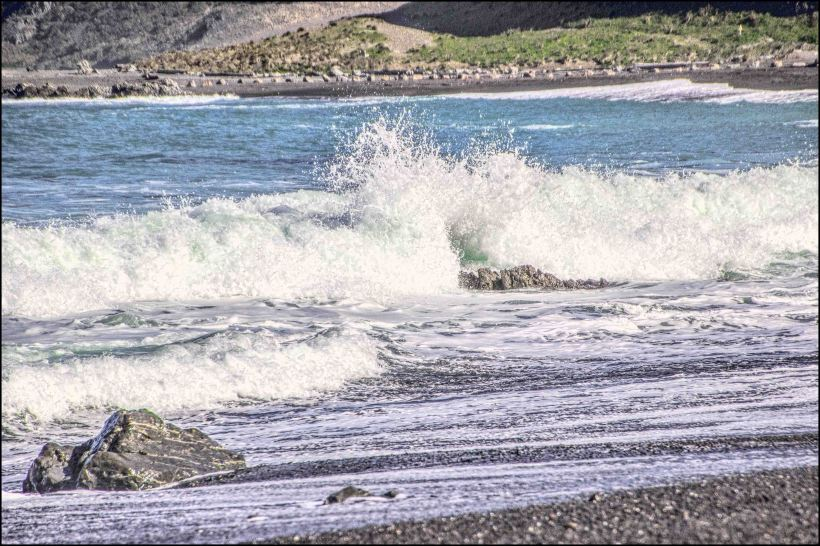 sotuh coast spary