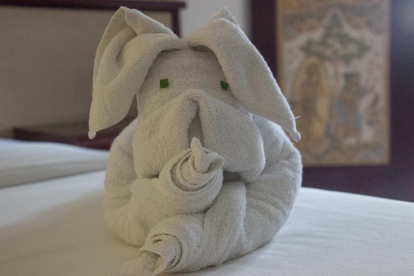 oddball towel dog