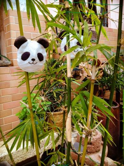 odd panda