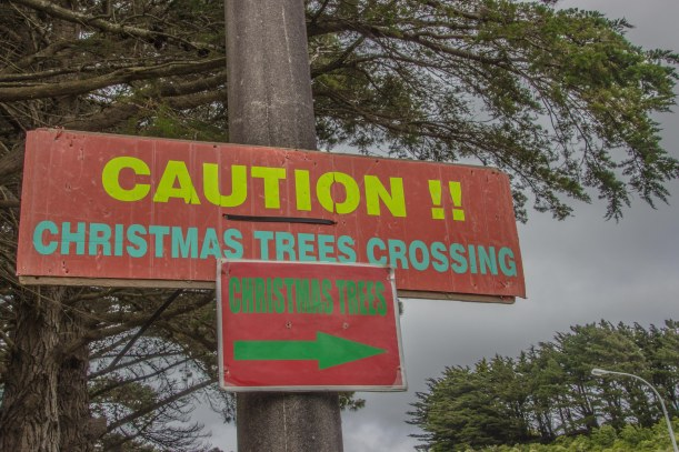 trees crossing